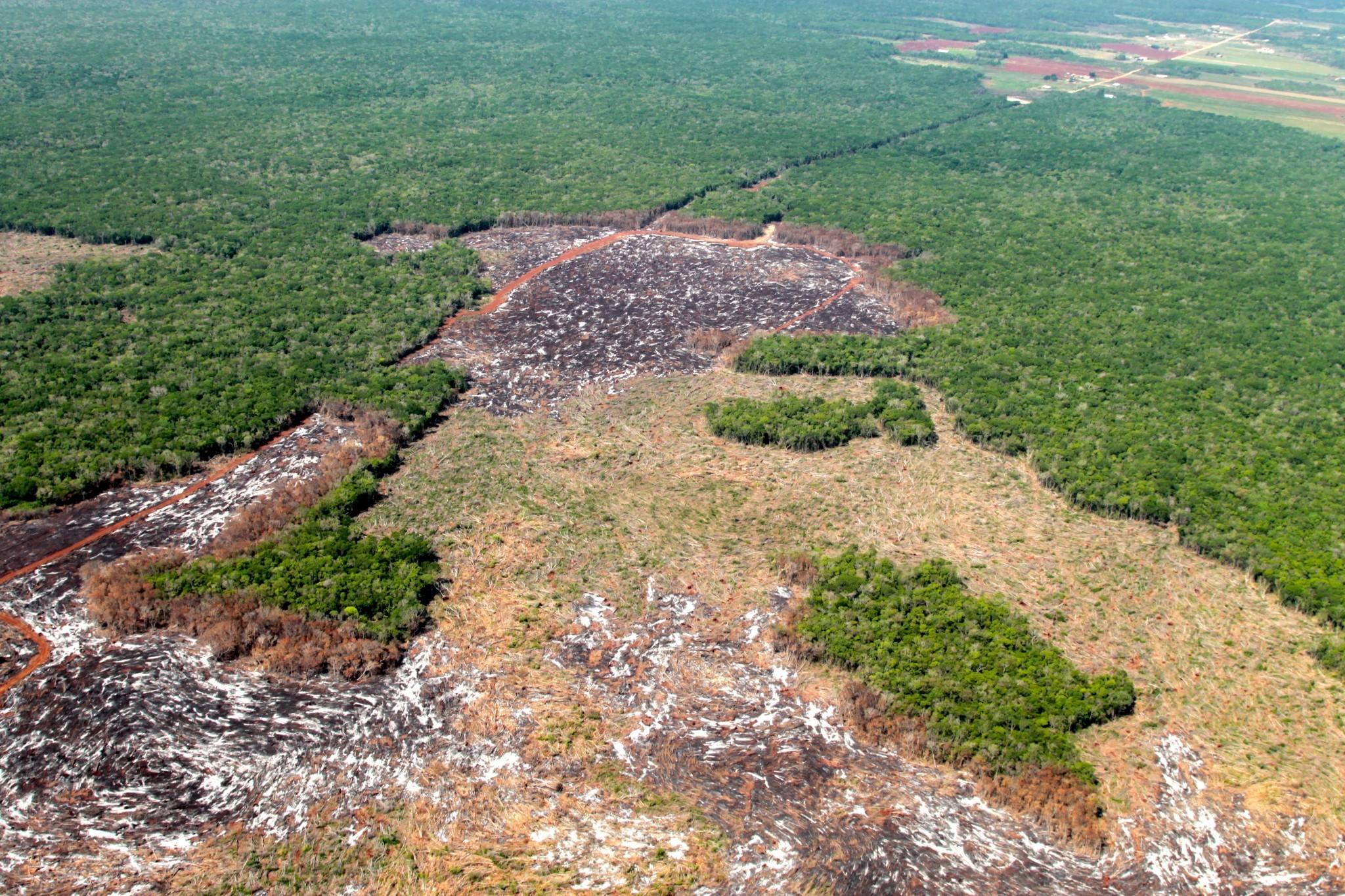 The Deforestation-Free Diet