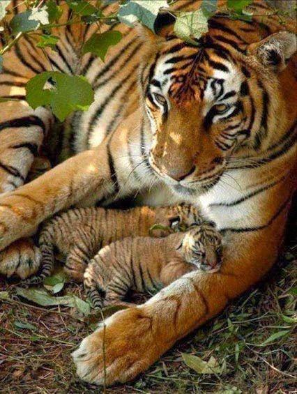 Ach ja die große Welt u kleine Katzen das macht müde also leise u schlaft gut