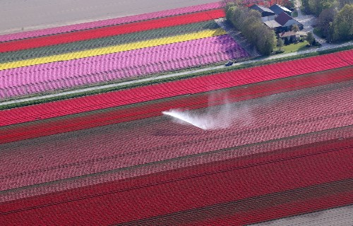 The Tulip Fields of Creil: Pictures