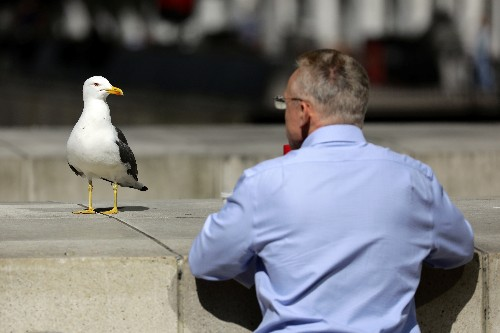 Staring at seagulls can stop them stealing food, research shows