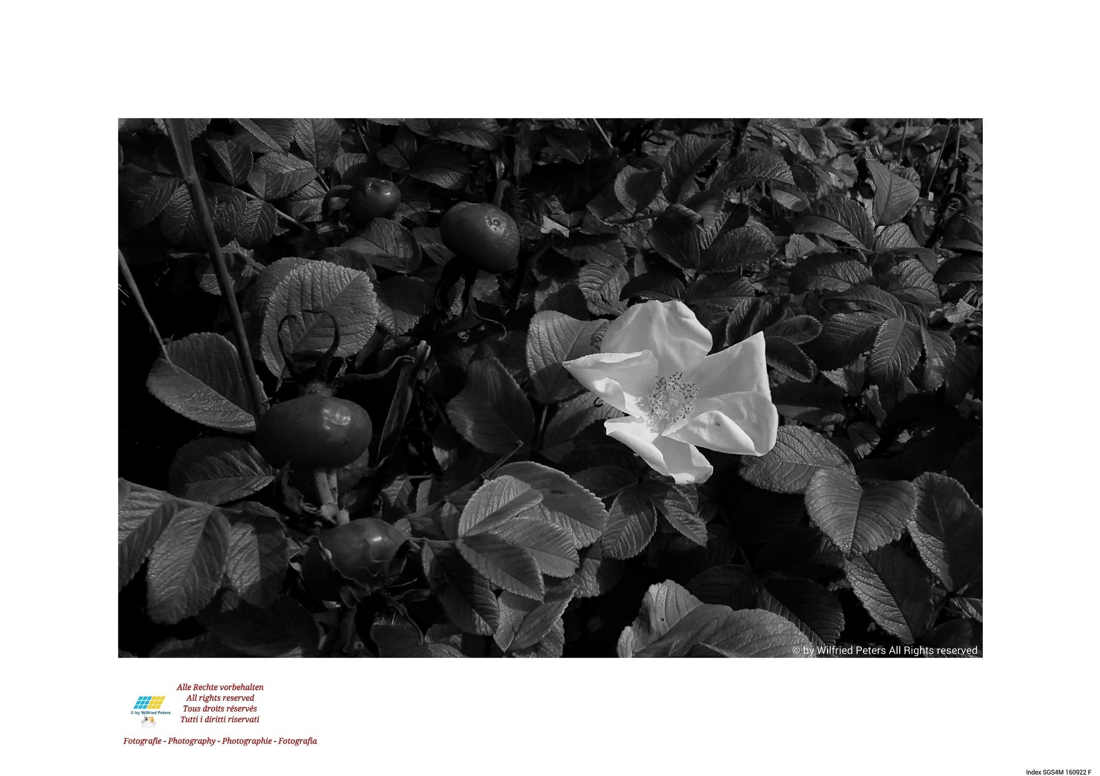#Fotografie #Photography #Photographie #Fotografia #Blüte #Blossom #Fleur #Fiore