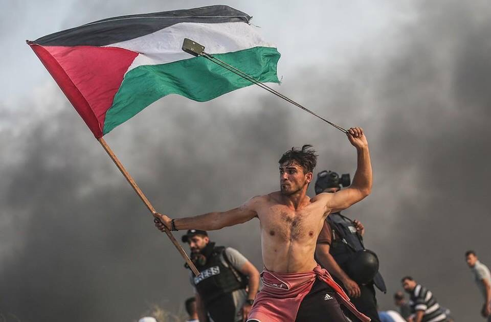 Free Palestine Now cover image