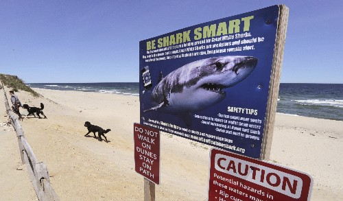 After shark attacks, is Cape Cod ready for tourist season?