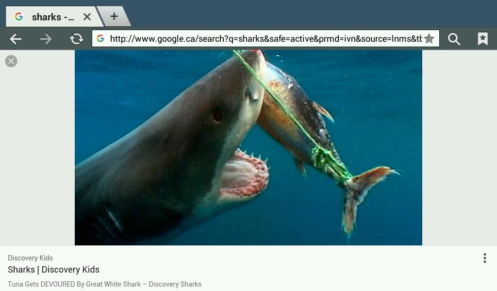 Shark's - Magazine cover
