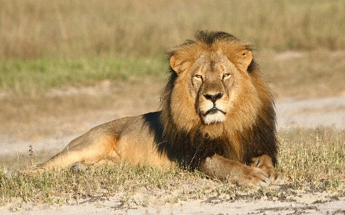 The Week in Review: Cecil the Lion's Death Sparks Outrage