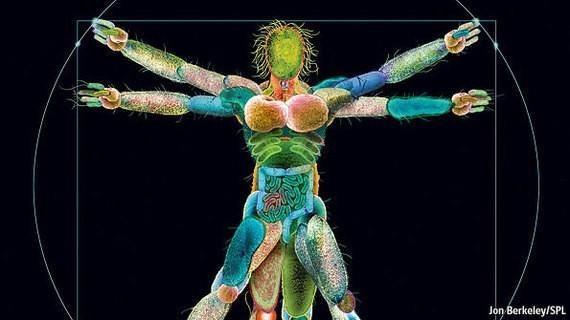 Congrats: You Are Officially a Superorganism
