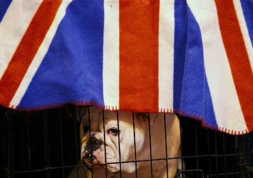 Crufts Dog Show Opens in the UK: Pictures