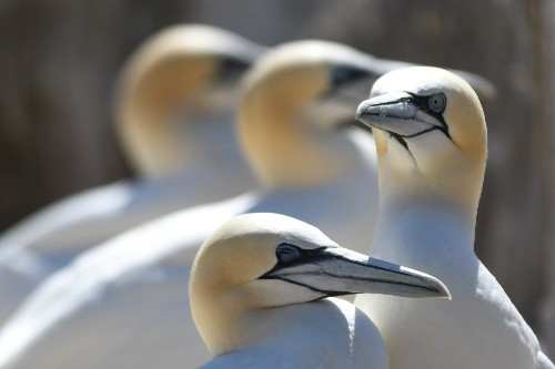 The Great Saltee Island Bird Sanctuary in Pictures