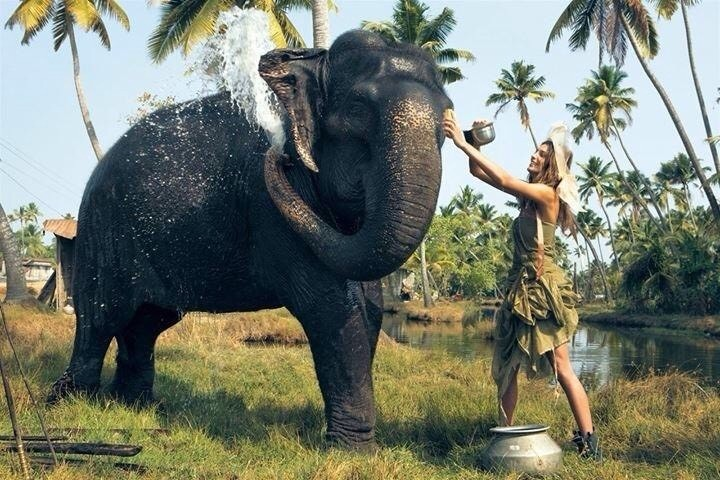 """""""I feel as if I go to Africa, I may never come back. I'm just going to live with the animals and adopt an elephant, and it's going to be my friend."""" ~ Dianna Agron"""
