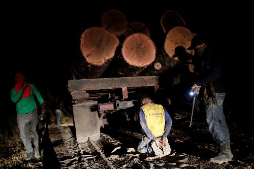 Fighting fire with fire, Amazon 'forest guardians' stalk illegal loggers