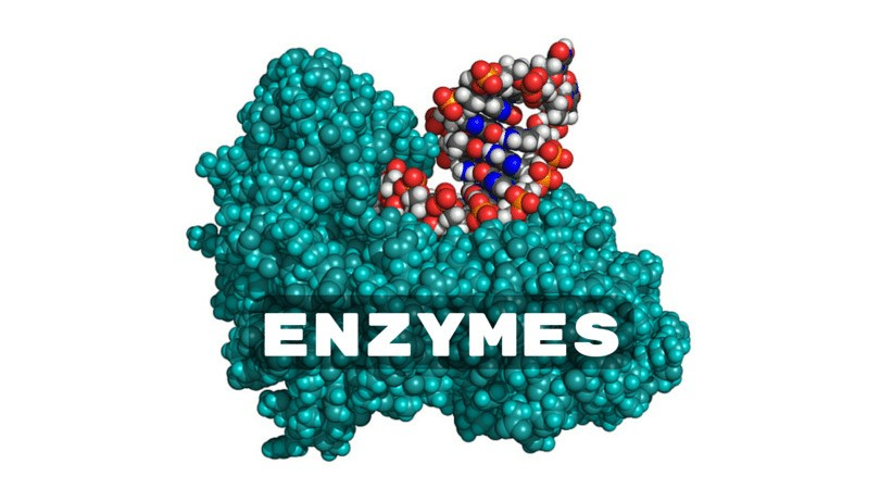 This image falls into Enzymes in my Passion section. Even though I thought the Toothpickase lab was pointless, it really helped me understand the functions of enzymes. I'm passionate about learning more about the chemical reactions inside a cell and I hope we will in the near future.