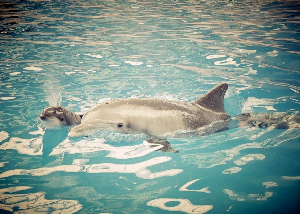 New Baby #Dolphin #born at #Brookfield #Zoo