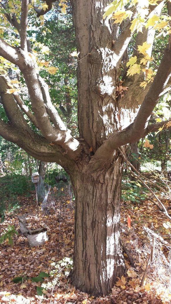 Sexy tree..