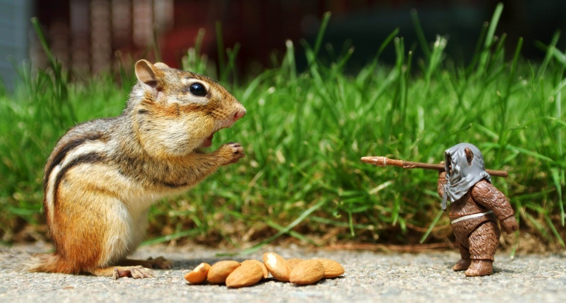 Squirrel wants his nuts