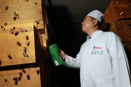 Bug business: Cockroaches corralled by the millions in China to crunch waste