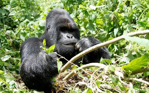 Congo's Virunga park reopens eight months after deadly ambush