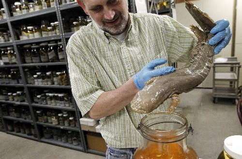 Eastern hellbender voted Pennsylvania's official amphibian