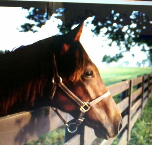 Quem Ama Cavalo Curta E quem Não Ama Também
