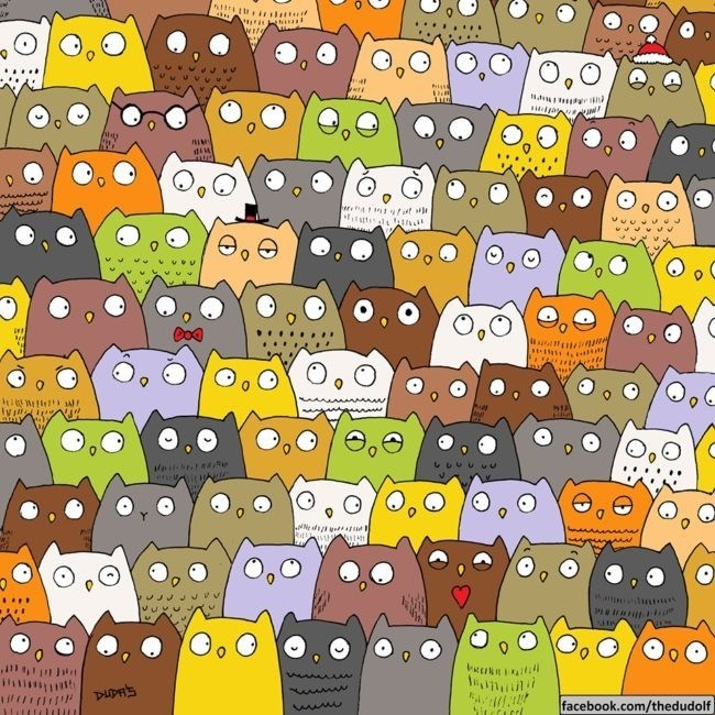 Can you spot the cat in this sea of owls???