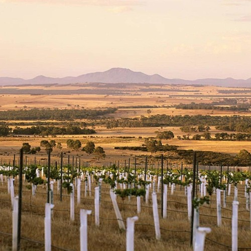 Victoria Moore: the biggest wine region you've never heard of