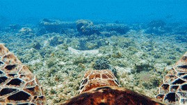 Ocean cover image