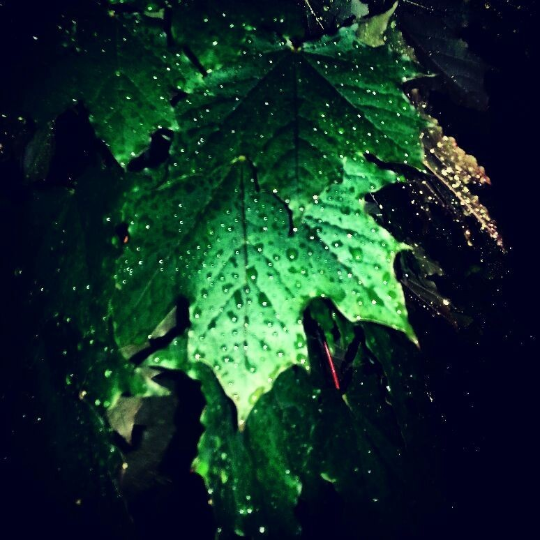 Love nature. Green leaves after the rain. Summer time.
