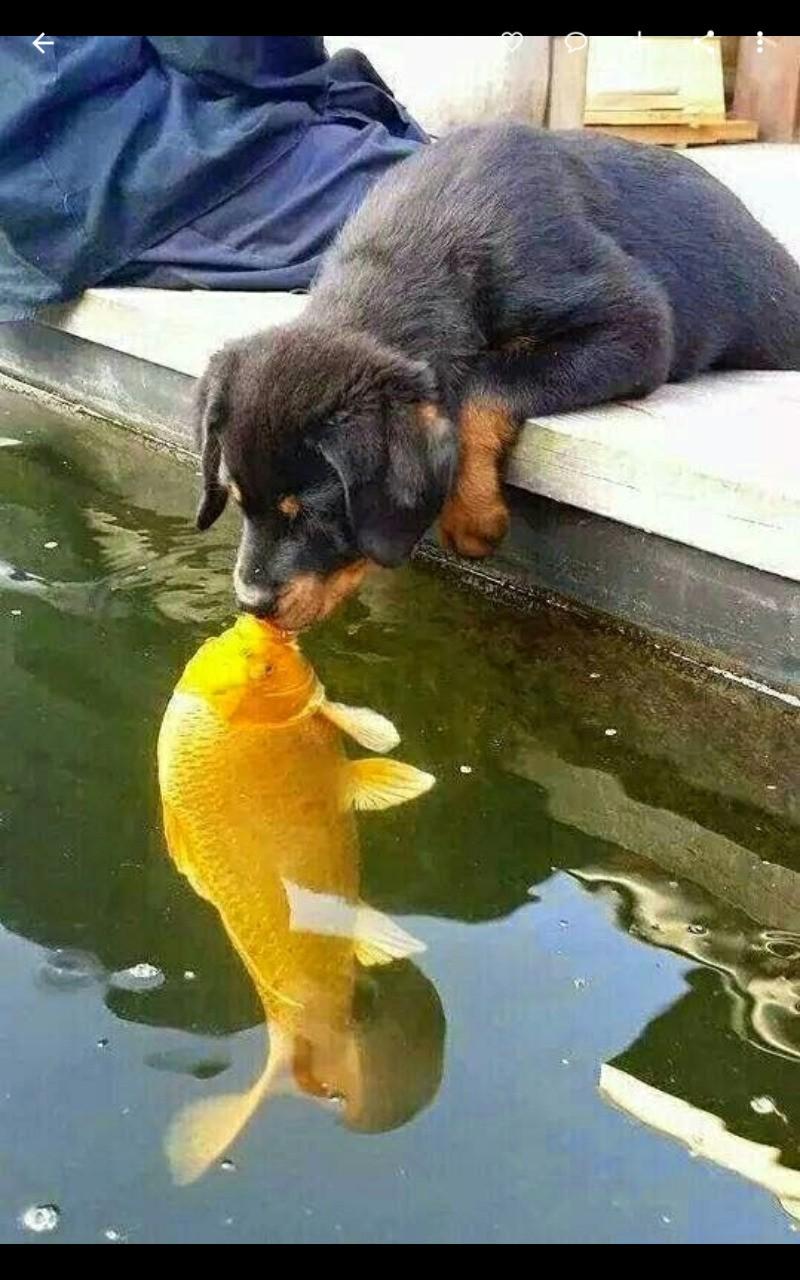 Kiss Me Quick! !