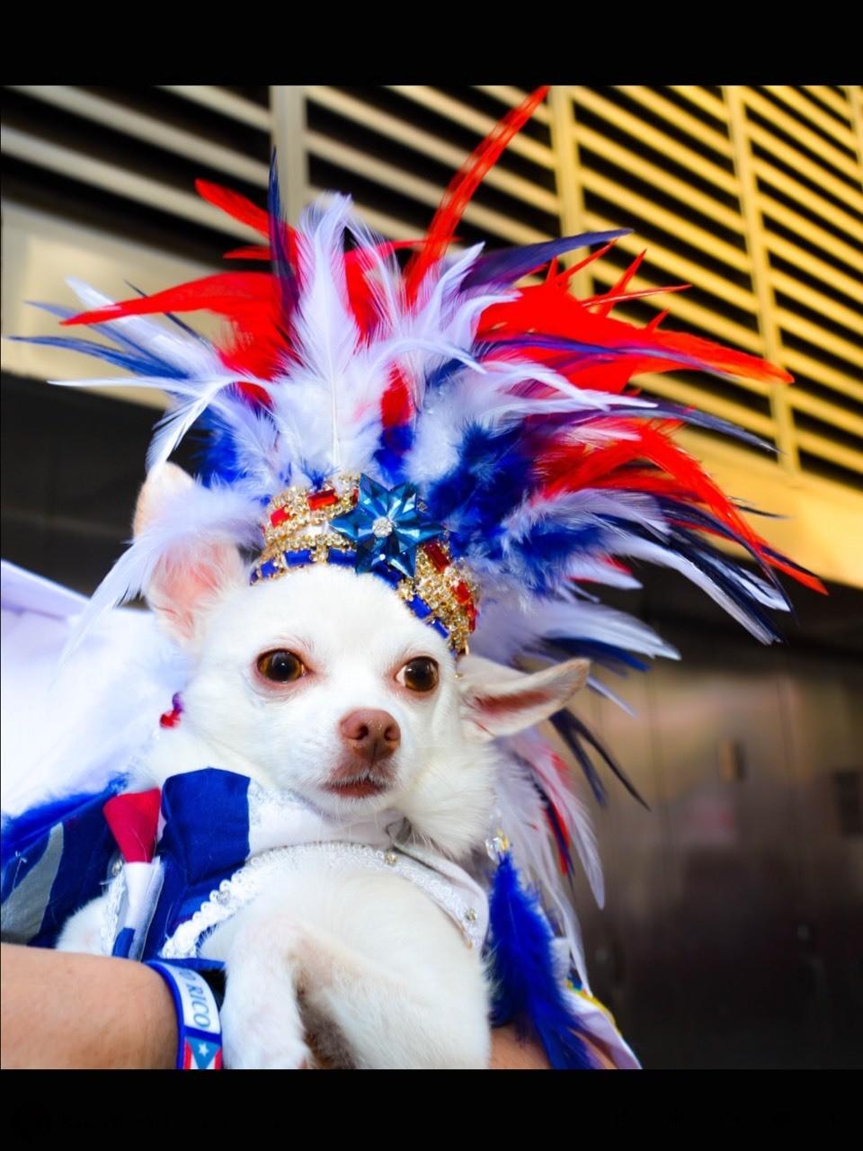 Follow dogs in hats