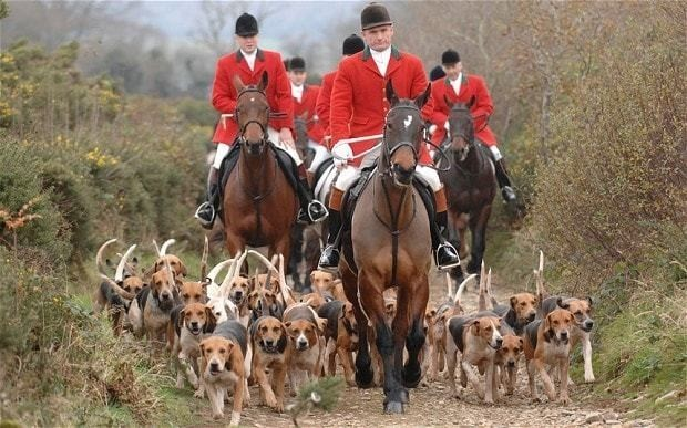 Tories to legalise fox hunting if they win 2015 general election