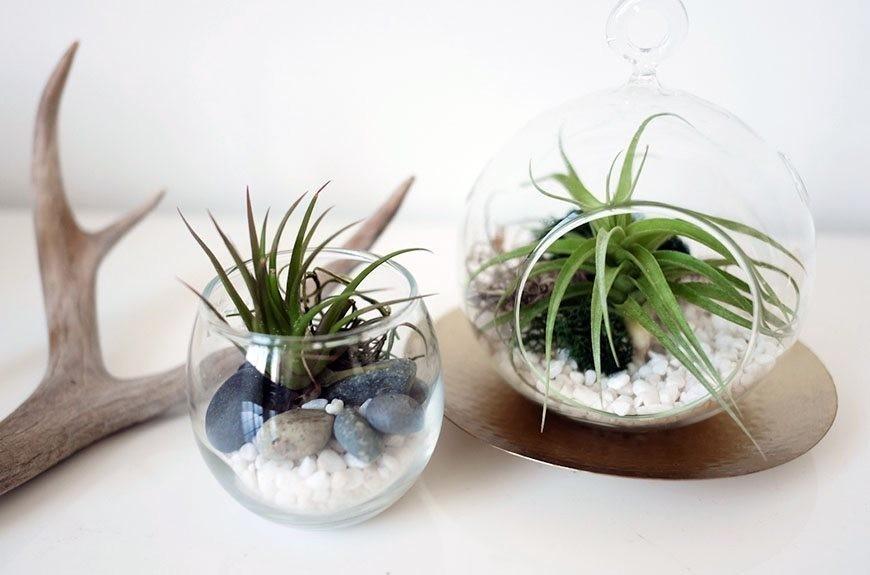 DIY Air Plant Terrariums