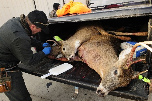 Nevada fighting to keep 'zombie deer' from entering state