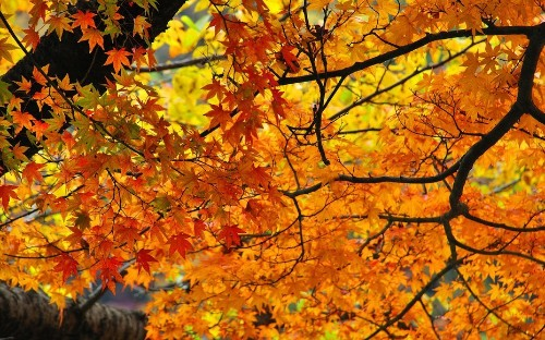 Welcome to fall. Here's how to do it right, in cities across the globe.