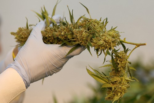 Evidence thin on medical pot, EU illegal drugs body says