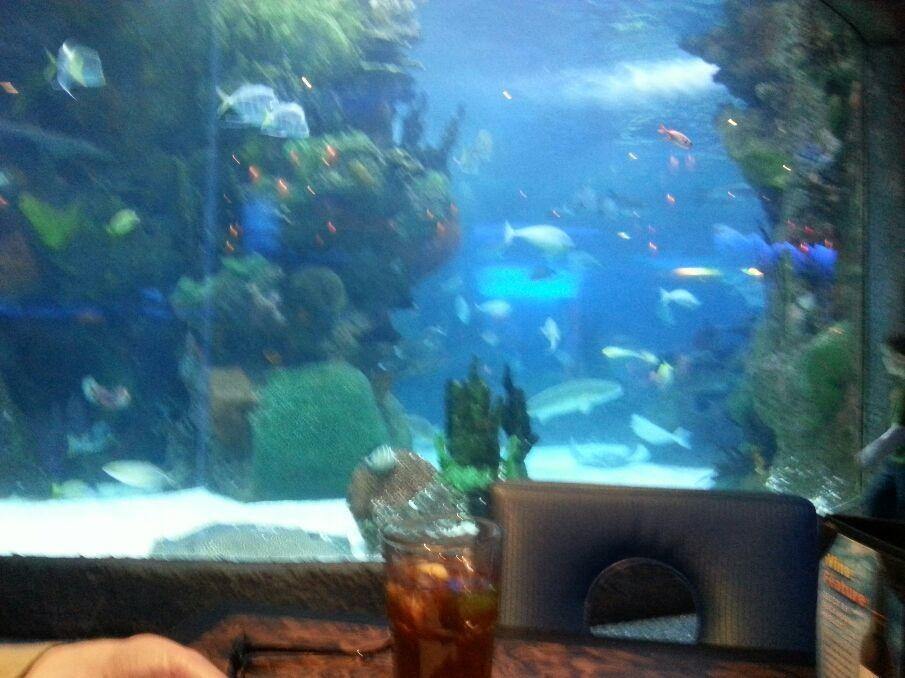 Our table at the Aquarium