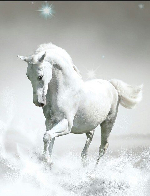 Pferderassen - cover