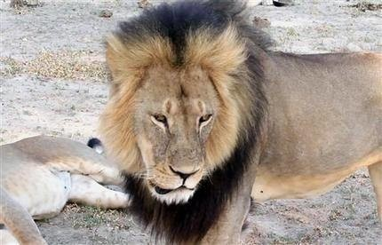 Zimbabwe alleges 2nd American illegally hunted lion