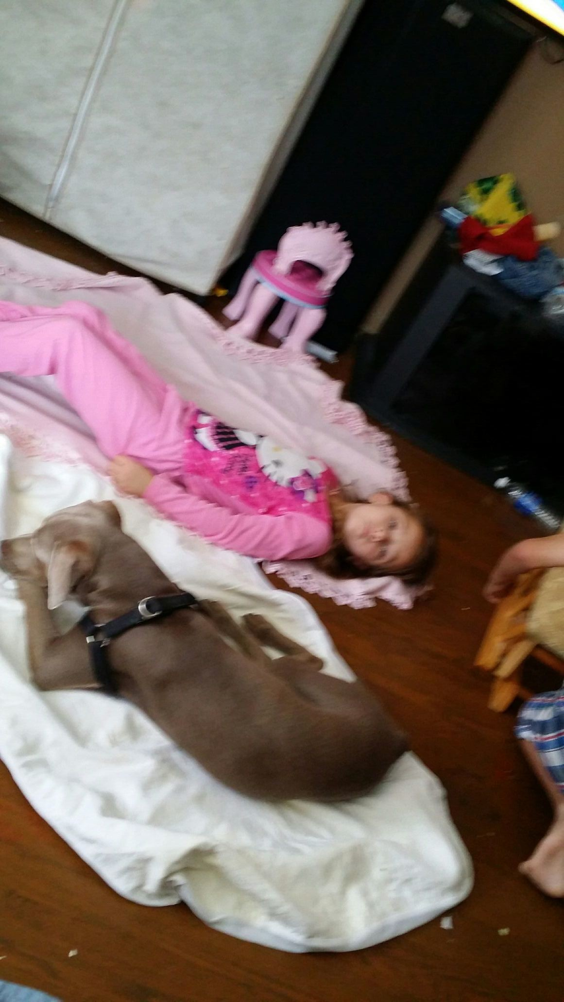 Kinda blurry but dozer is chillin with belle