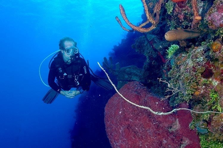 Seven unmissable dive sites in the Cayman Islands