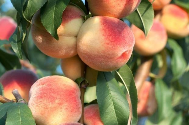 Buyers beware: The 12 most pesticide-contaminated fruits and vegetables