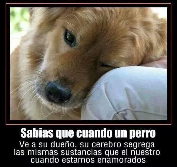 Ama a tus perritos!!! Son maravillosos.