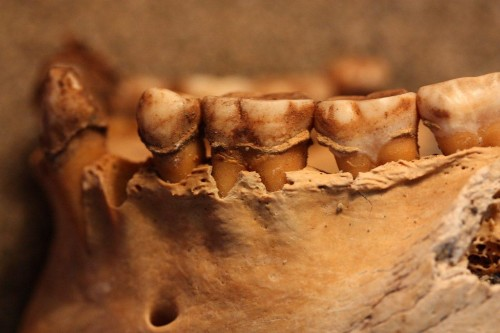 Micro-Fossils Show Moche Munched On Marine Meals