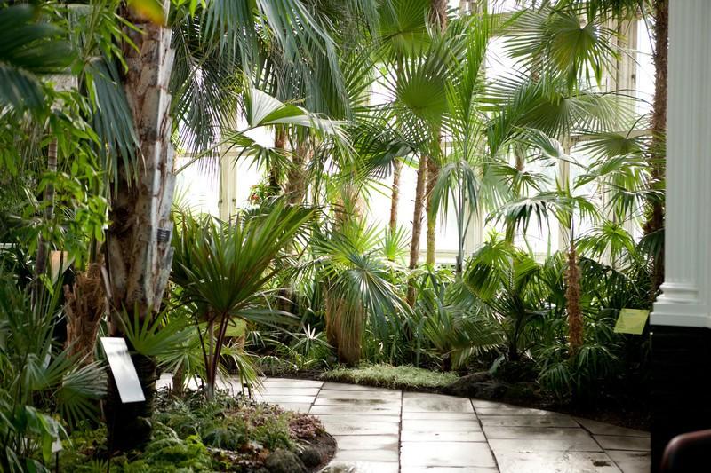 New York Botanica Conservatory