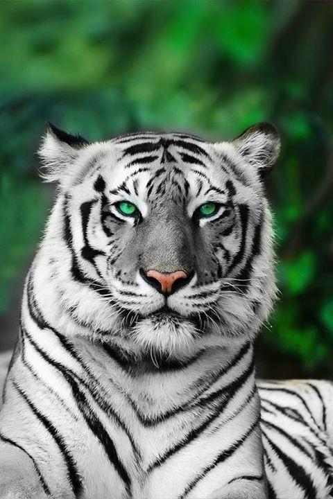 Animal's World cover image