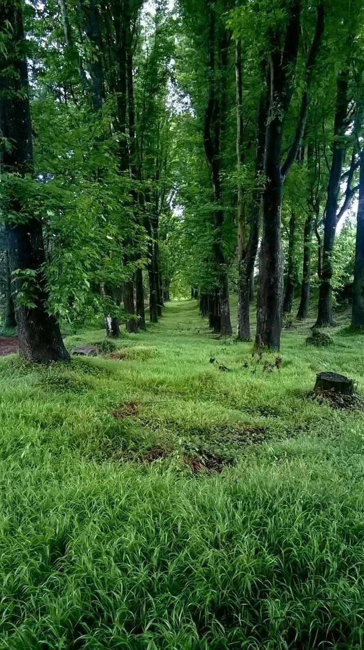 Lovers Lane is blooming green. Photo taken: Nomsa