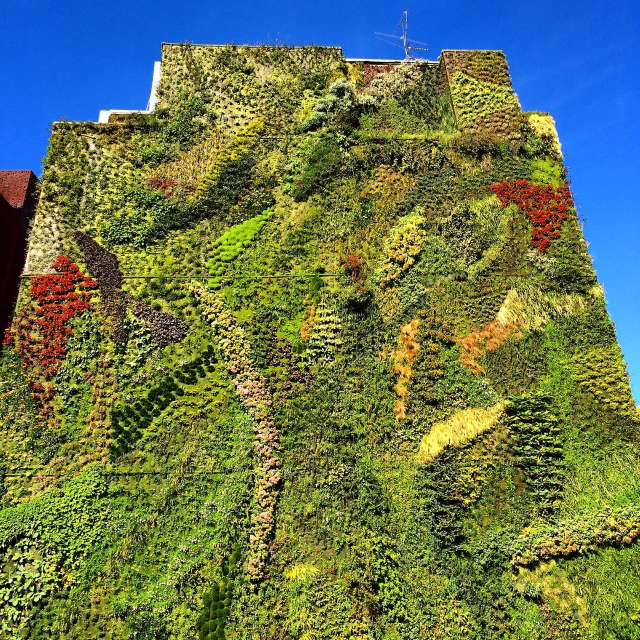 Vertical garden Caixa Forum