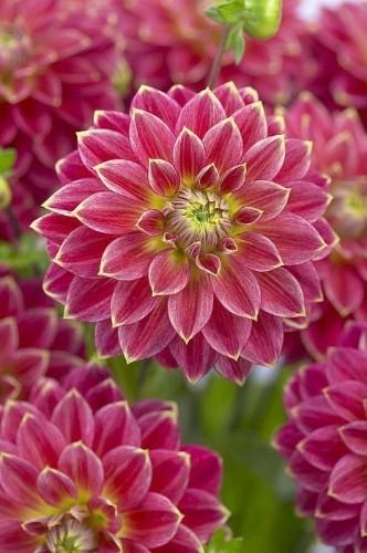 Splendid Flowers - Magazine cover