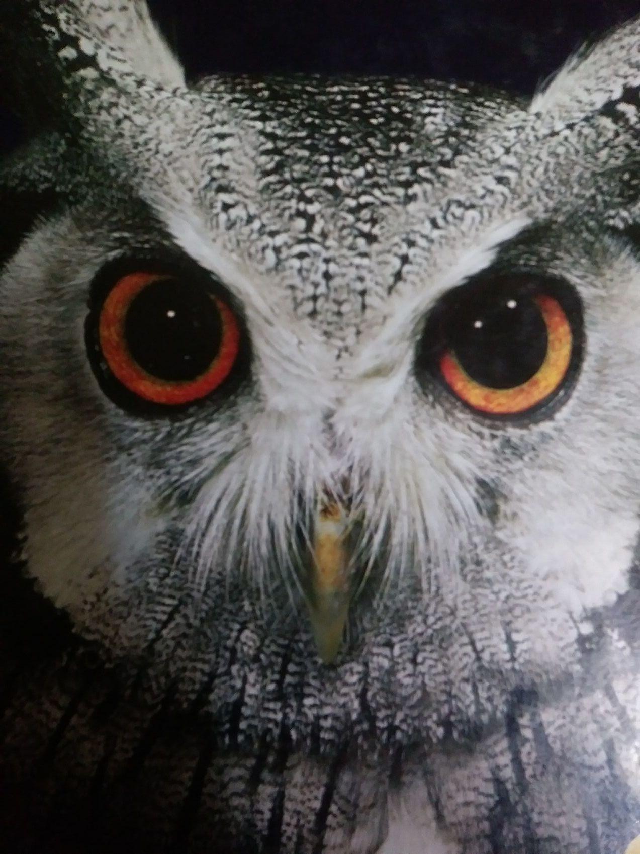Honors Bio Reflection - Magazine cover