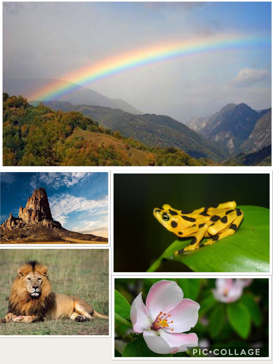 Task 3: This image is showing us how beautiful and creative god is and his creativity is shown through many objects and animal.