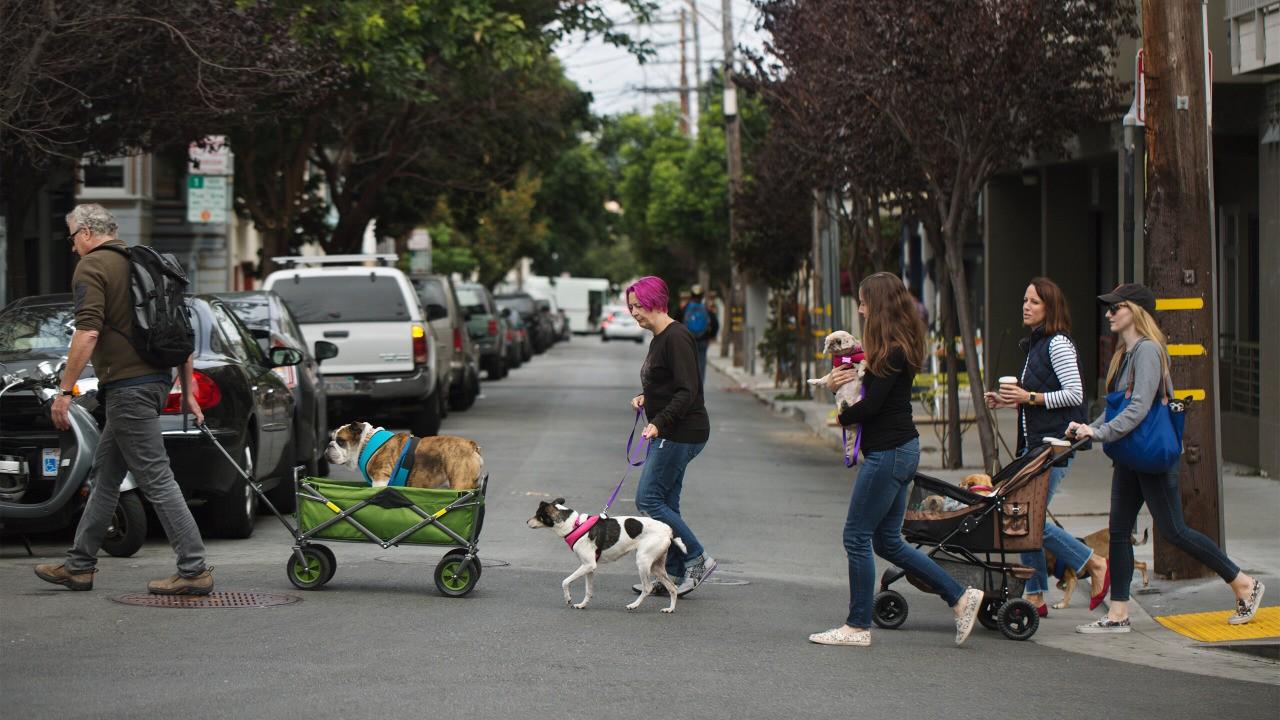 Day 1: Dog Walk and Muttville Visit
