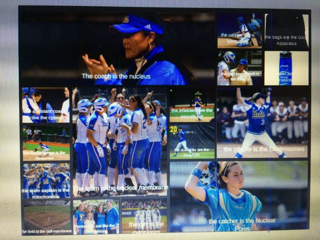 I chose the canva project because it had to have been the best project we did in this class I loved it, we have total freedom to do what we wanted. Of course I chose a softball team.